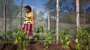 Central America Microloans gardens