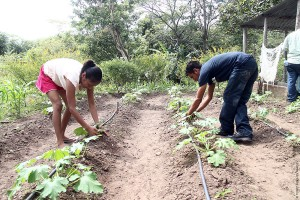 Central America microloans agriculture