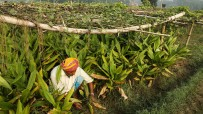 Multi-layer farming in Sheohar India