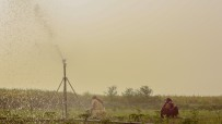 Rain guns in Indian fields